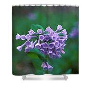 Pink Virginia Bluebells 1c Shower Curtain