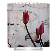 Pink Water Lily Buds Shower Curtain