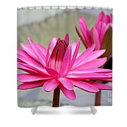 Pink Water Lily Duo Shower Curtain