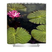 Pink Water Lily I Shower Curtain
