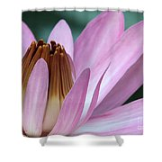 Pink Water Lily Macro Shower Curtain