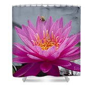 Pink Water Lily Rose Arey With Bee Shower Curtain