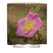 Pink Wild Rose Shower Curtain