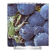 Pinot Hitchhiker Shower Curtain by Jean Noren