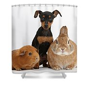 Pinscher Puppy With Rabbit And Guinea Shower Curtain