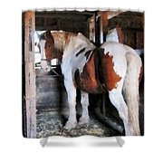Pinto Looking Back Shower Curtain