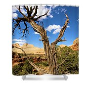 Pinwheel Tree Shower Curtain