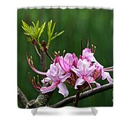 Pinxterbloom Azalea  Shower Curtain
