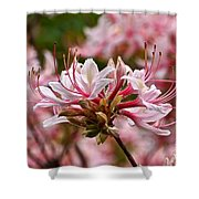 Pinxterflower Azalea Shower Curtain