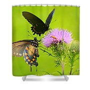 Pipevine Swallowtails In Tandem Shower Curtain