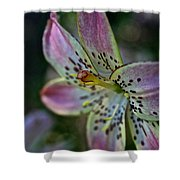 Pistil Powered By Stamen Shower Curtain