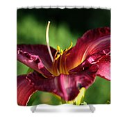 Pistons Of The Pink Yellow Lily Shower Curtain