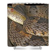 Pit Viper Shower Curtain