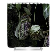 Pitcher Plant Inside The National Orchid Garden In Singapore Shower Curtain