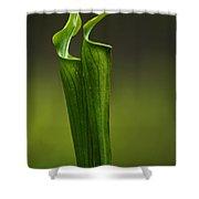 Pitcher Plants 2 Shower Curtain