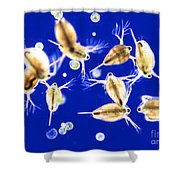 Plankton, Daphnia, And Volvox Shower Curtain by M. I. Walker