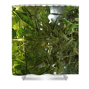 Plant Growth Experiment, Iss Shower Curtain