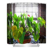 Planter In France Shower Curtain