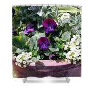 Planter Of Purple Pansies And White Alyssum Shower Curtain