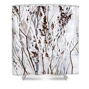 Plants In Winter Shower Curtain