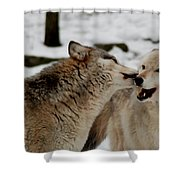 Playful Wolves Shower Curtain