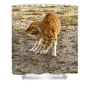 Playful Yellow Kitty Shower Curtain