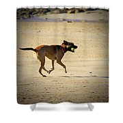 Playing Ball On The Beach  Shower Curtain