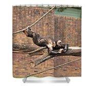 Playing Chimp II Shower Curtain