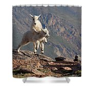 Playtime On The Brink Shower Curtain