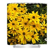 Please Don't Eat The Daisies Shower Curtain
