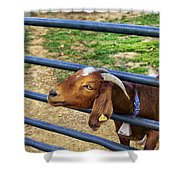Please Exonerate Me - Billy Goat Shower Curtain