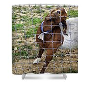 Please Exonerate Me 2 - Billy Goat Shower Curtain