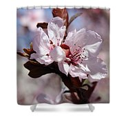 Plum Blossoms 10 Shower Curtain