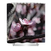 Plum Blossoms 9 Shower Curtain