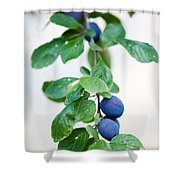 Plum Tree Shower Curtain