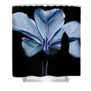 Plumbago Close Up Shower Curtain