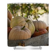 Plump And Purdy Pumpkins Shower Curtain