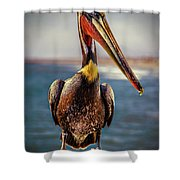Plump Peter Pelican's Pier Photo Pose Shower Curtain