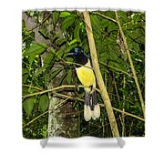 Plush-crested Jay Shower Curtain