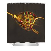 Podocyrtis Triacantha Lm Shower Curtain