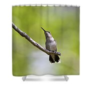 Pointer Shower Curtain