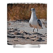 Poised Seagull Shower Curtain