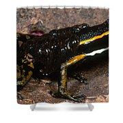 Poison Arrow Frog With Tadpoles Shower Curtain