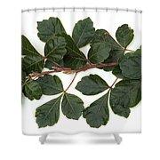 Poison Oak Branch Shower Curtain