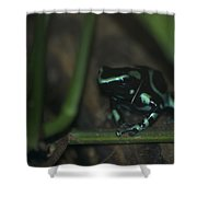 Poisonous Green Frog 04 Shower Curtain