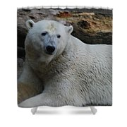 Polar Bear 1 Shower Curtain