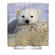 Polar Bear Cub Canada Shower Curtain