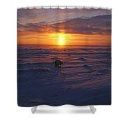 Polar Bear In Arctic Sunset Shower Curtain