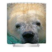 Polar Bear Swim Shower Curtain