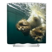Polar Bear Swiming Away Wager Bay Canada Shower Curtain